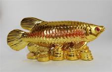نکات فنگ شویی برای انتخاب ماهی آکواریوم سایت هنری فندق